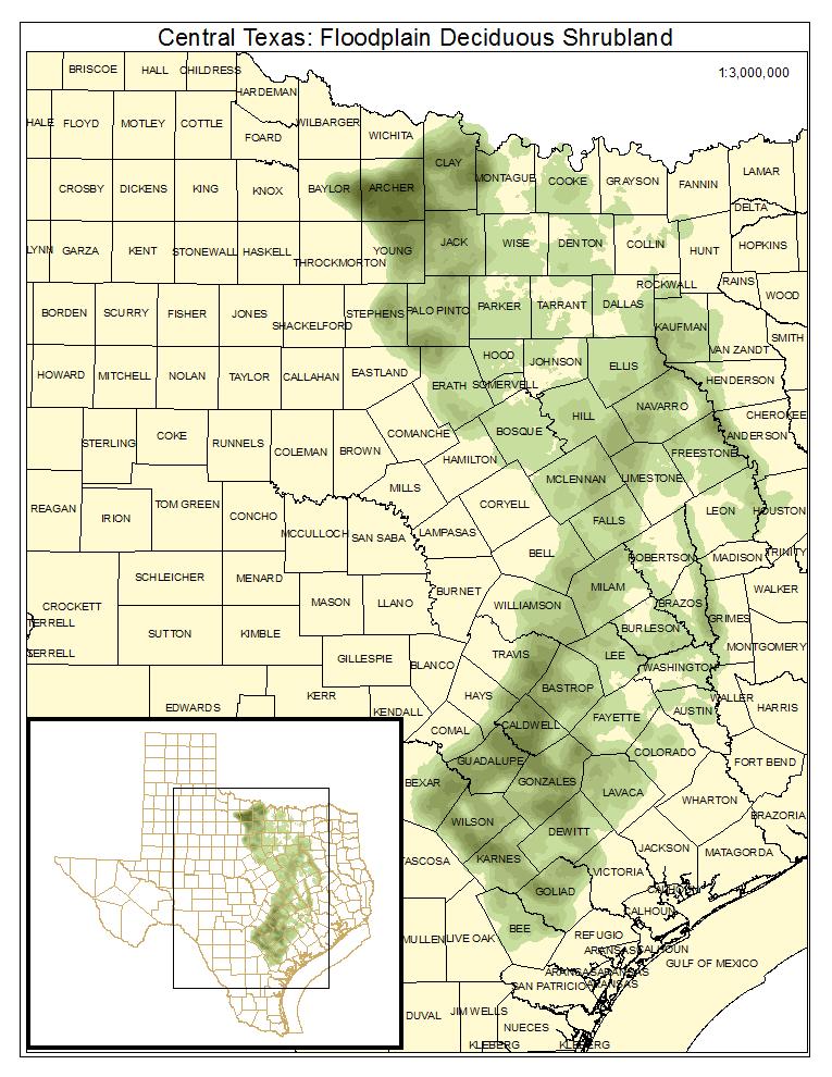 Central Texas: Floodplain Deciduous Shrubland