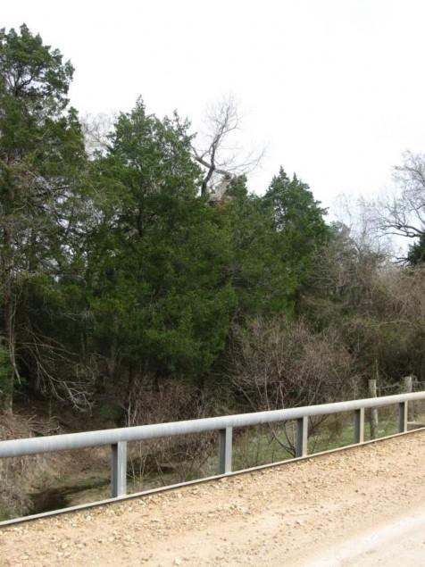 Example Central Texas: Floodplain Evergreen Forest.jpg