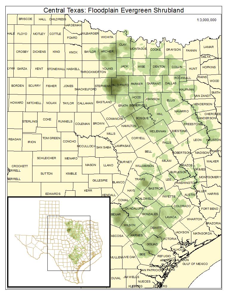 Central Texas: Floodplain Evergreen Shrubland