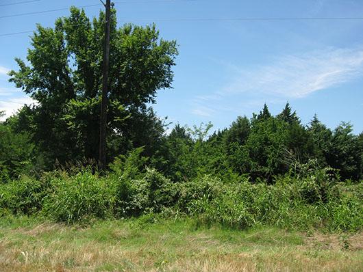 centxfloodplain_juniper_shrubland_site2403.jpg