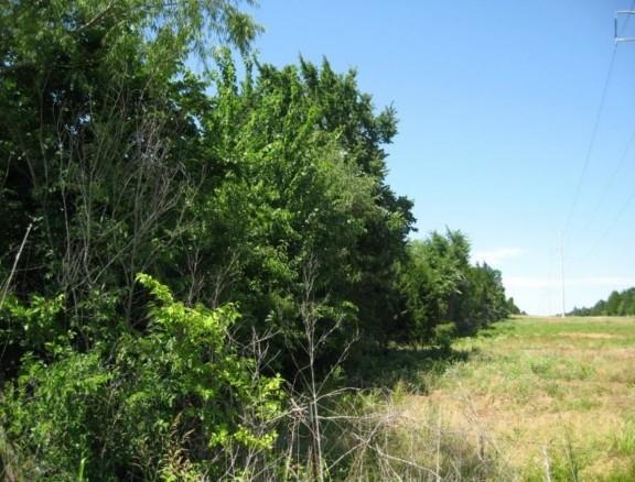 Example Central Texas: Floodplain Hardwood/Evergreen Forest.jpg