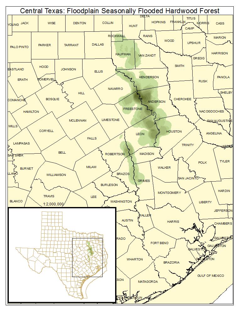 Central Texas: Floodplain Seasonally Flooded Hardwood Forest