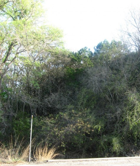 Example Central Texas: Riparian Evergreen Forest.jpg