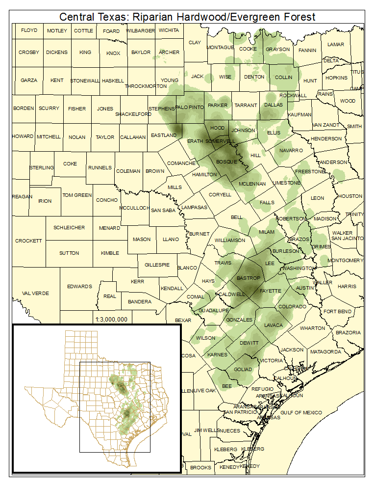 Central Texas: Riparian Hardwood / Evergreen Forest