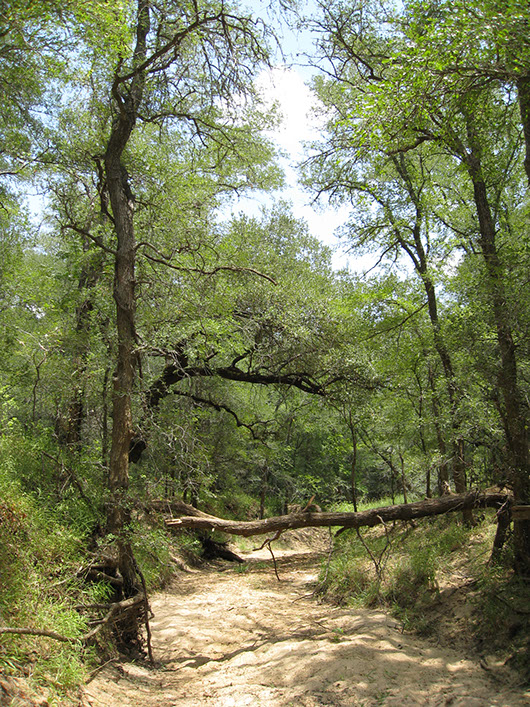 central texas-riparian hardwood-evergreen forest-195.jpg