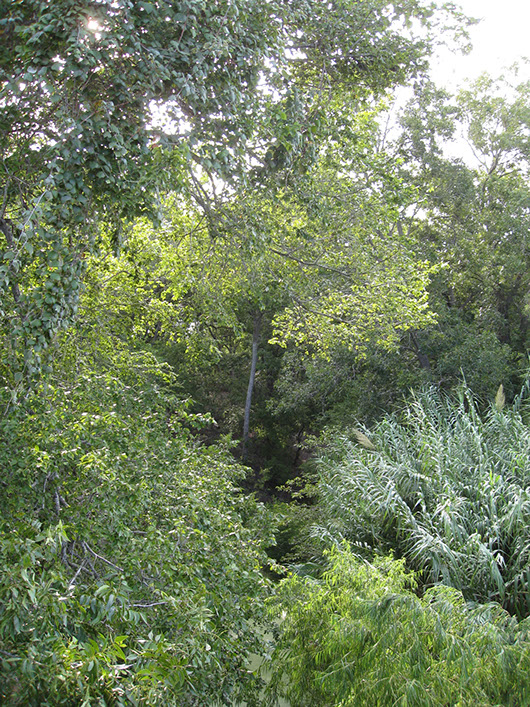 central texas-riparian hardwood forest-689.jpg