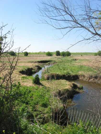 Example Central Texas: Riparian Herbaceous Vegetation.jpg