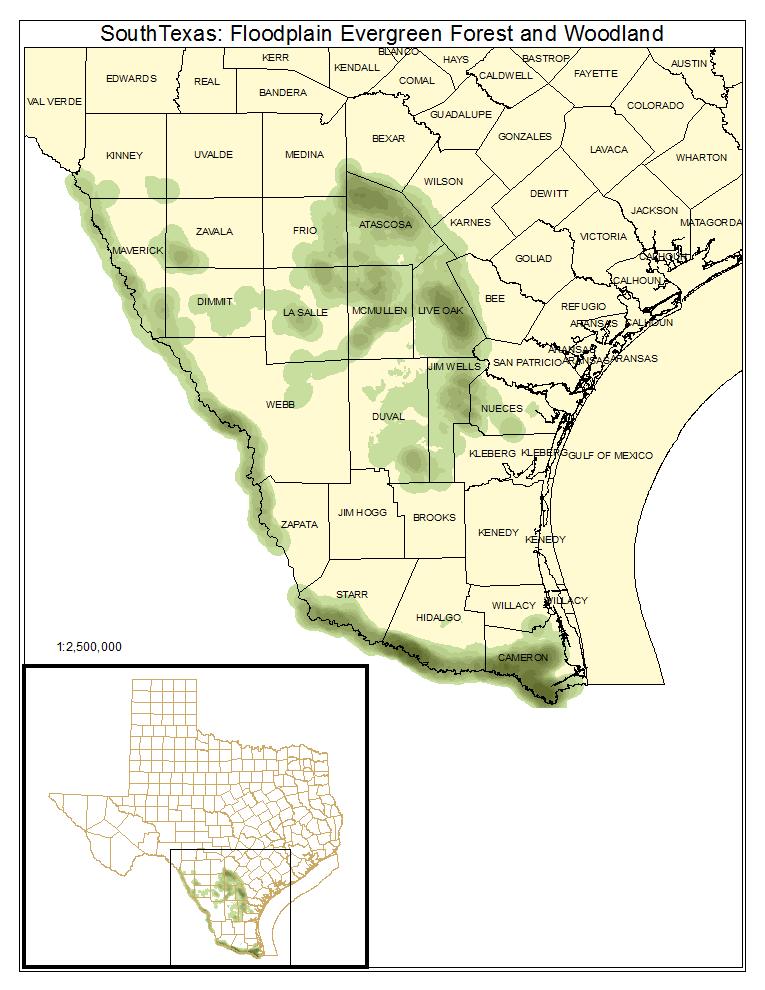 South Texas: Floodplain Evergreen Forest and Woodland