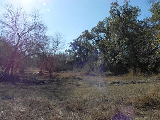 south texas-floodplain evergreen forest and woodland-1484.jpg