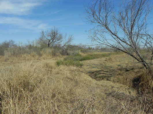 south texas-floodplain grassland-1419.jpg