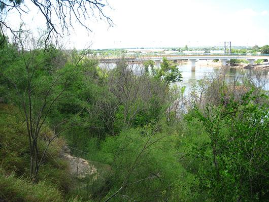 south texas-floodplain hardwood forest and woodland-577.jpg