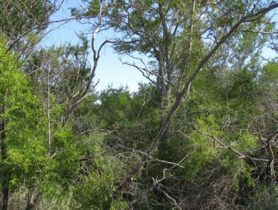 Example South Texas: Floodplain Mixed Deciduous/Evergreen Forest and Woodland.jpg
