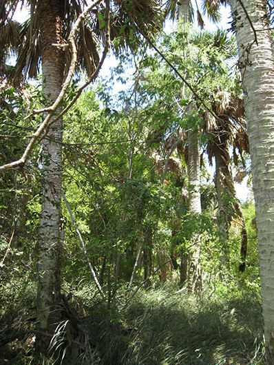 Example south texas: palm grove.jpg
