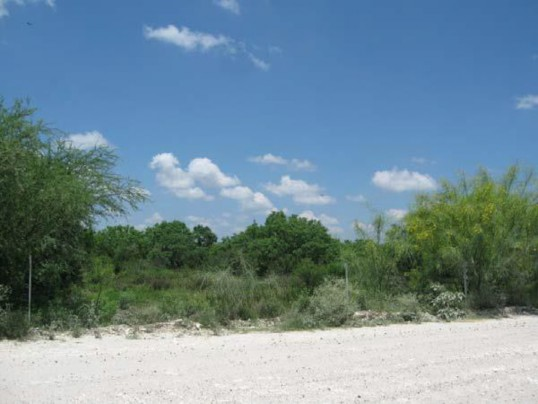 Example South Texas: Ramadero Evergreen Woodland.jpg