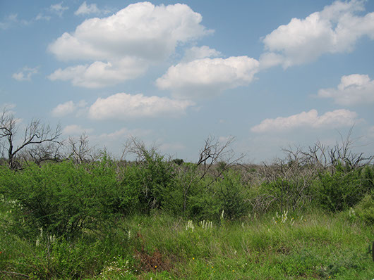 south texas-ramadero shrubland-141.jpg