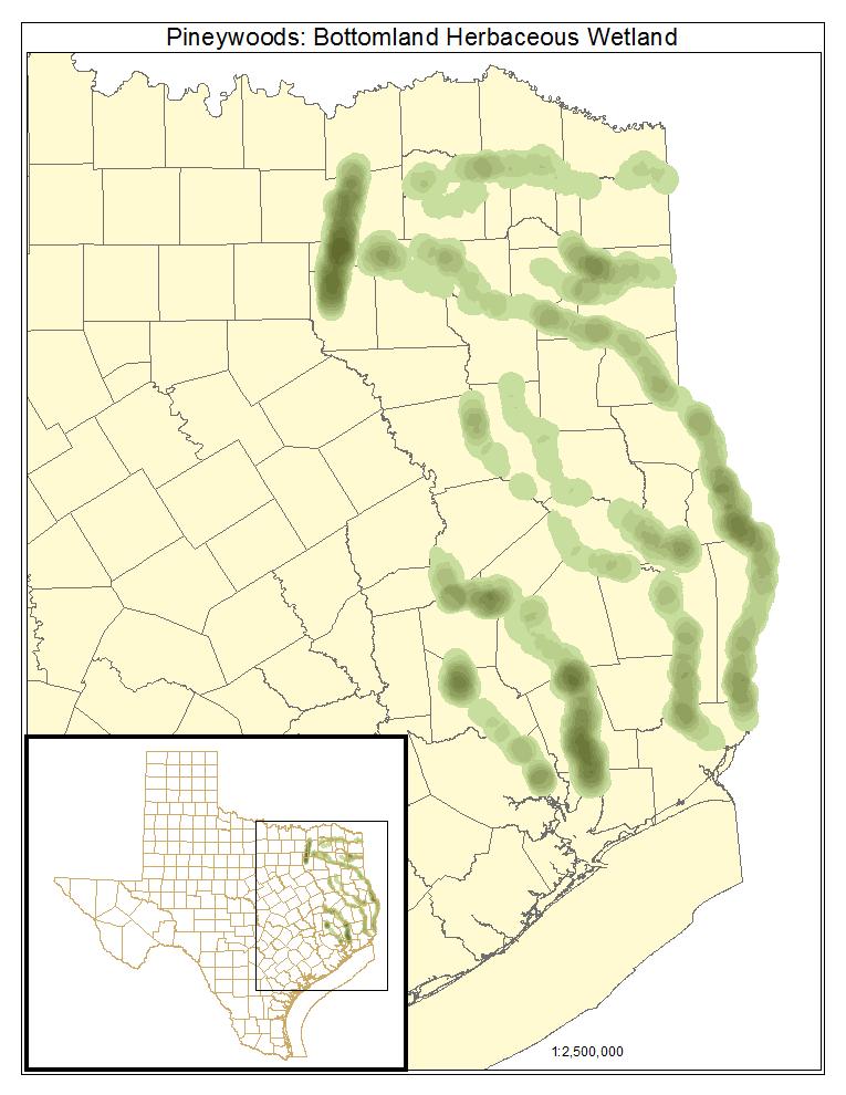 Pinewoods: Bottomland Herbaceous Wetland