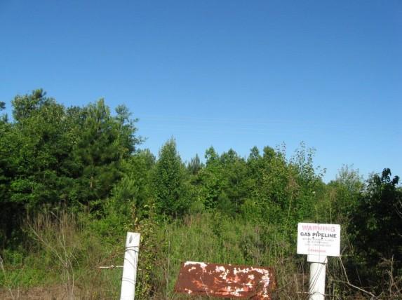 Example Pineywoods: Bottomland Evergreen Successional Shrubland.jpg