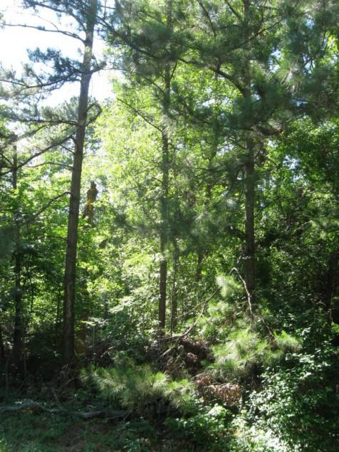 Example Pineywoods: Bottomland Temporarily Flooded Mixed Pine/Hardwood Forest.jpg