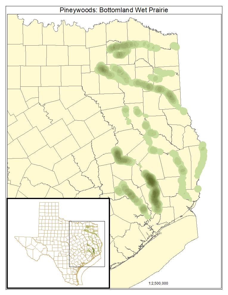 Pineywoods: Bottomland Wet Prairie