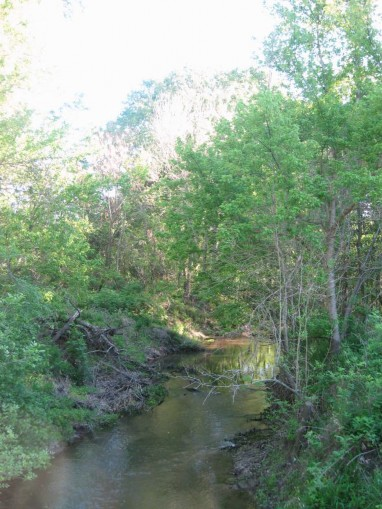 Example Pineywoods: Small Stream and Riparian Deciduous Successional Shrubland.jpg