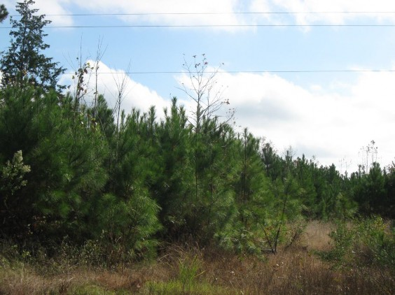Example Pineywoods: Small Stream and Riparian Evergreen Successional Shrubland.jpg