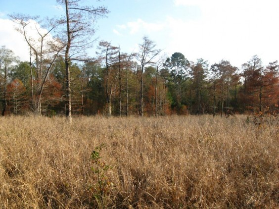 Example Pineywoods: Small Stream and Riparian Herbaceous Wetland.jpg