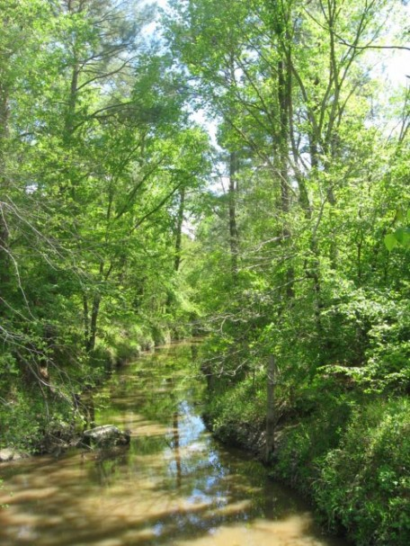 Example Pineywoods: Small Stream and Riparian Temporarily Flooded Hardwood Forest.jpg