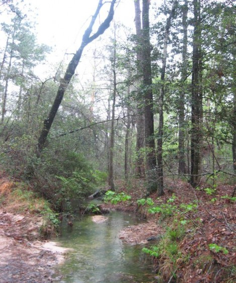 Example Pineywoods: Small Stream and Riparian Temporarily Flooded Mixed Forest.jpg
