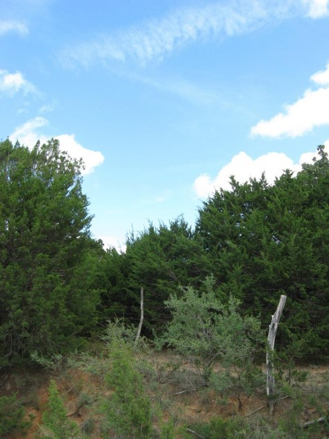 Example High Plains: Floodplain Juniper Forest.jpg