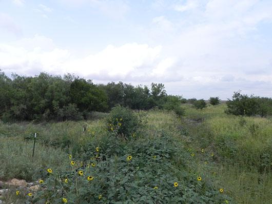 high plains-riparian deciduous shrubland-1072.jpg