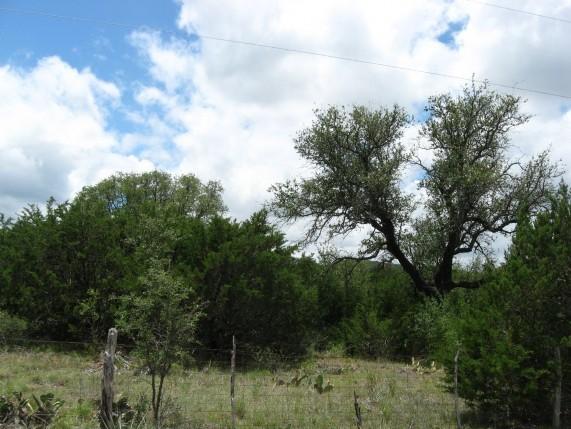 Example High Plains: Riparian Hardwood/Juniper Forest.jpg