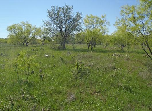 high plains-riparian herbaceous vegetation-265 (2).jpg