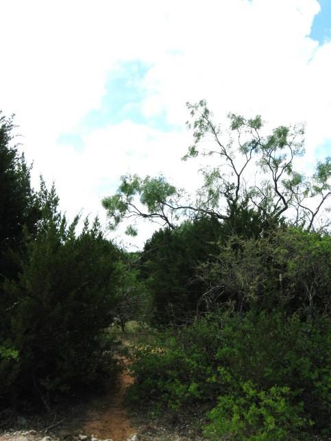 Example High Plains: Riparian Juniper Forest.jpg