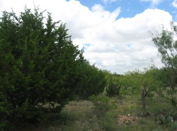 Example High Plains: Riparian Juniper Shrubland.jpg