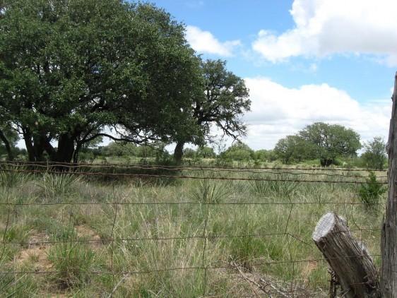 Example High Plains: Riparian Live Oak Forest.jpg