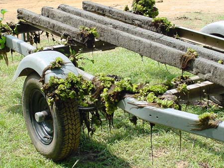 Giant Salvinia on boat trailer