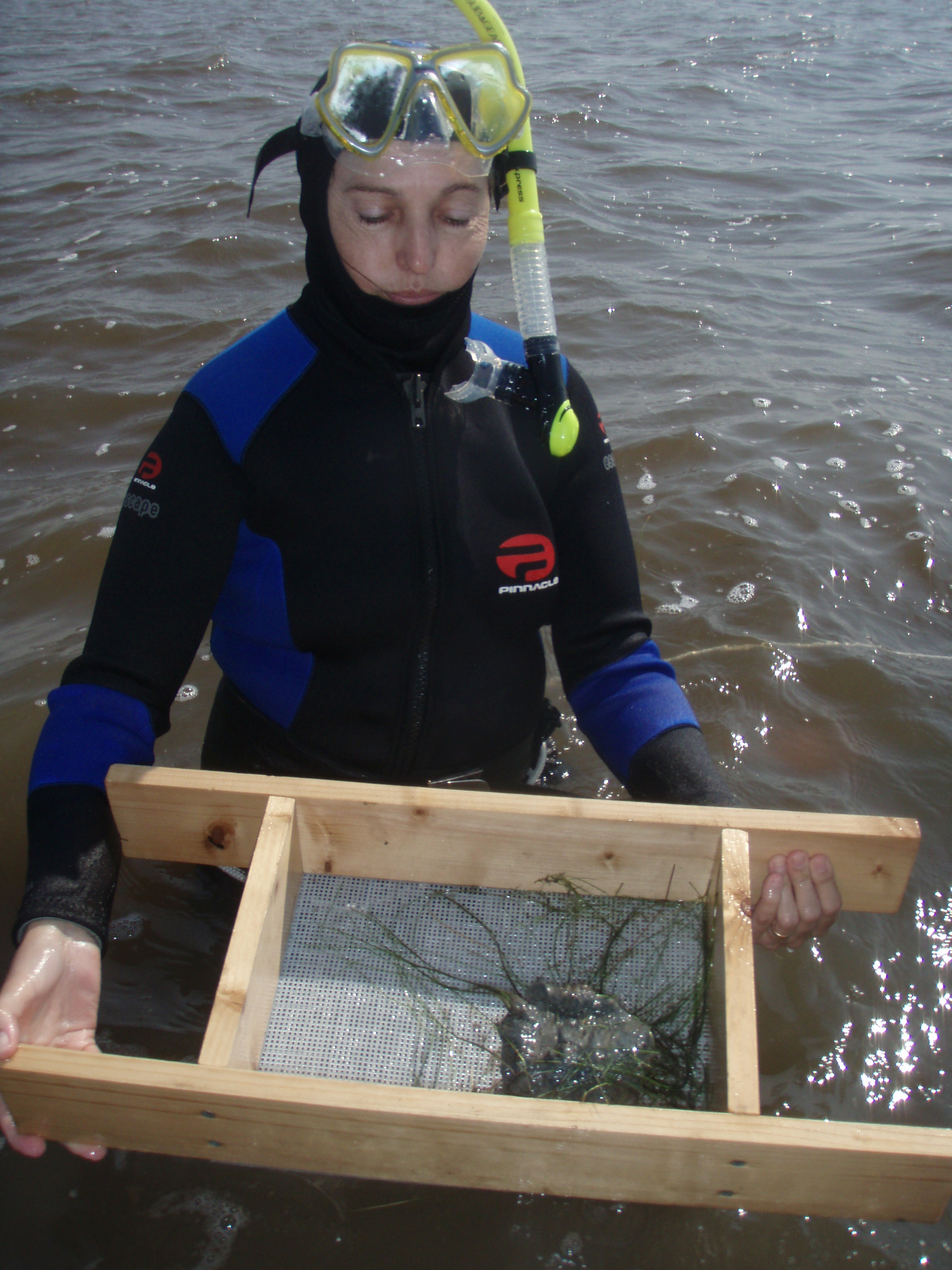 aquatic-beetles research-paper Research paper benthic macroinvertebrate biodiversity improved with irrigation ponds linked to a in their study on the combination of aquatic beetles in.