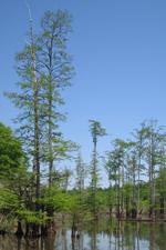 wetlands abiotic and biotic factors