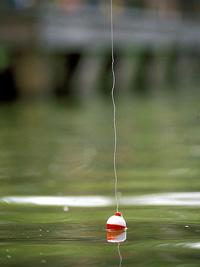 Tpwd winter 2008 state parks getaways for Sheldon lake fishing