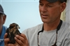 3 Brian Mutch of Peregrine Fund With Aplomado Falcon