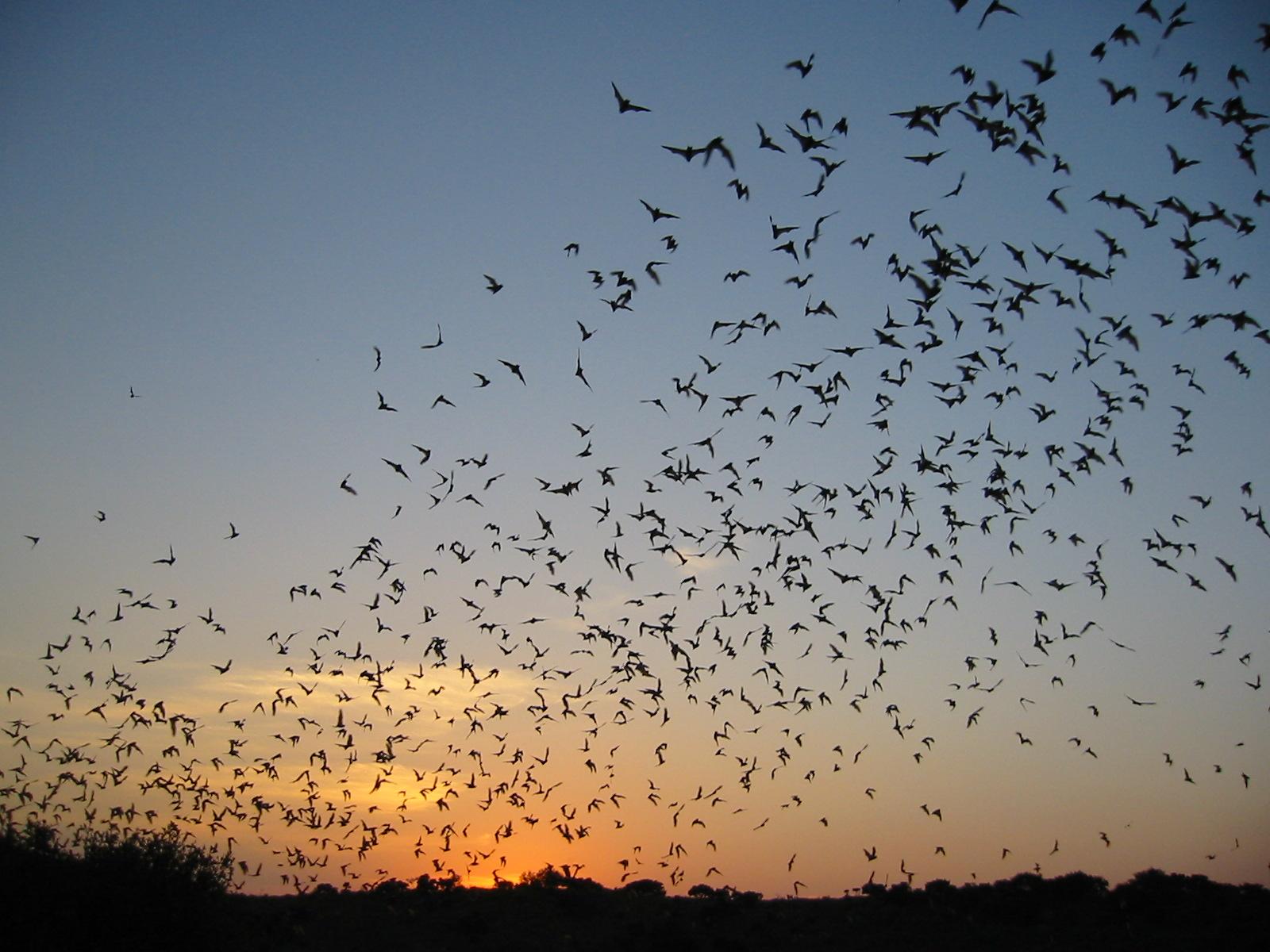 Frio Cave Bat Emergence
