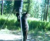 Black Bear at Feeder in East Texas, 2009