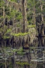 Caddo Lake 0033