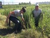 Sea Scouts Harvest Marsh Grass for Dickinson Bayou Restoration 1