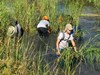 Sea Scouts Harvest Marsh Grass for Dickinson Bayou Restoration 2