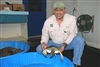 2. 2-7-11 Ruben Chavez Caring for Green Sea Turtle at MDC