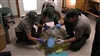 Scientists Attaching Satellite Transmitter to Ridley Sea Turtle
