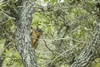 3 - Squirrel at Powderhorn Ranch