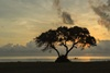 3 - Tree at Sunset With Fishing Boat on Matagorda Bay at Powderhorn Ranch