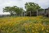 3 - Wildflowers Inside Corral Fence at Powderhorn Ranch, Horizontal